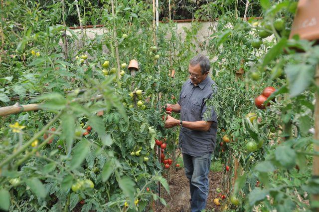 Un jardin et un potager biologique cologique et en permaculture denis p pin - Jardin potager bio saint denis ...