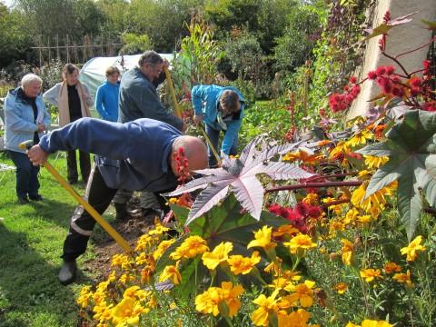 préparation de sol avant un semis d'engrais vert