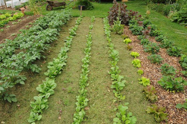 paillis printanier de tontes de pelouse sèches