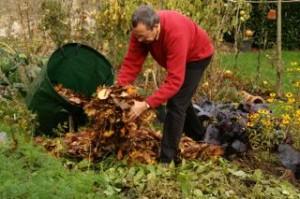 apport de paillis de feuilles mortes sur des haricots coupés en fin de récolte et laissés sur place