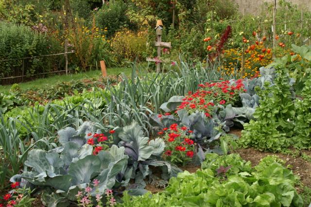 Le potager est organisé pour l'essentiel en rangs alternés, mêlant légumes et fleurs.