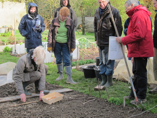Plantation des bulbilles d'oignons